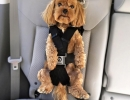 SEAT-BELT-FOR-DOGS (3)