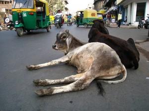 INDIAN-HORN-PROBLEM-2