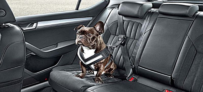 SKODA-DOG-SEAT-BELTS-3